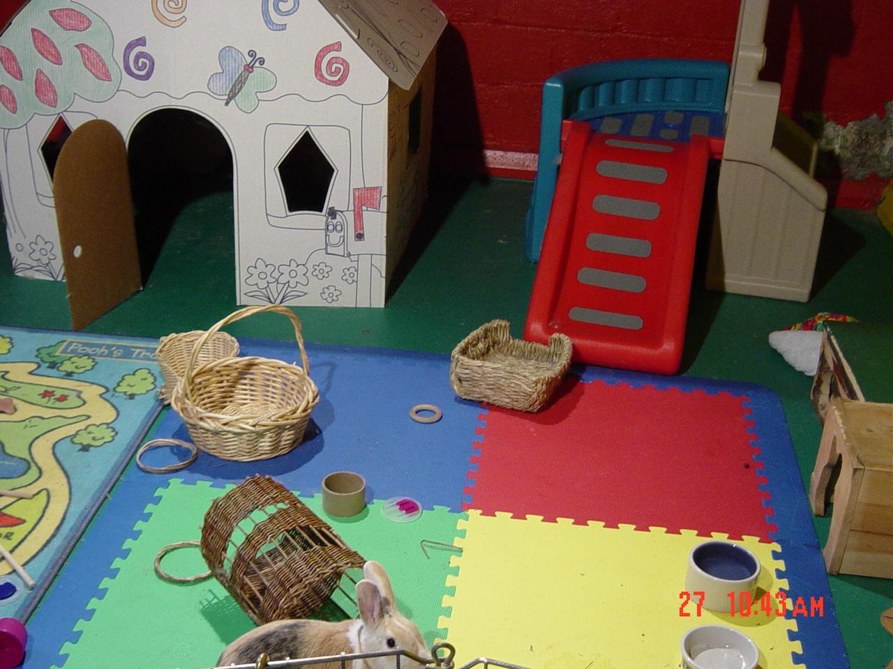 House Rabbit Society Chicago