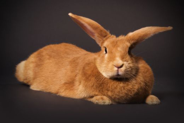 Petfinder List Of Our Adoptable Buns